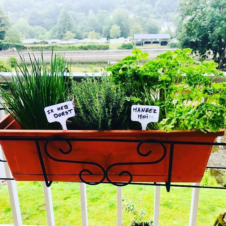 les herbes aromatiques à votre disposition